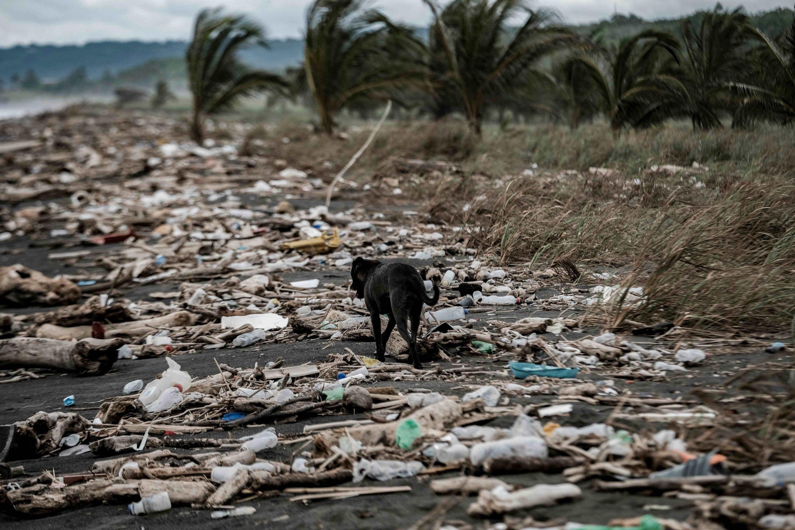 un arma contra el cambio climático - Prensa Libre
