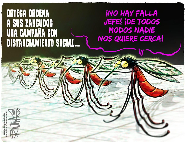 zancudos, Px Molina, caricatura